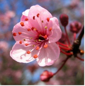Fleur du matin. dans Poésie fleur-295x300